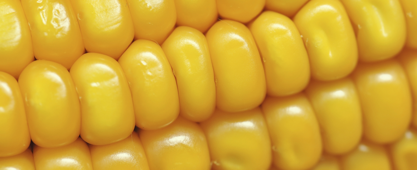 close-up of ear of corn